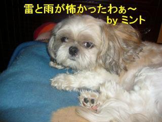 mint_20070916_1