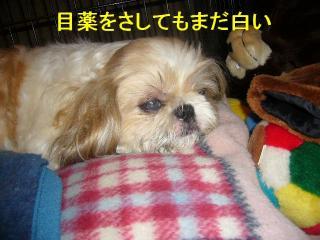 bibi_20070917_2