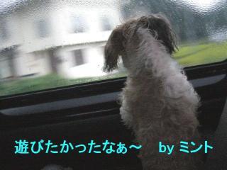 mint_20070924_12