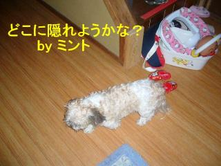 mint_20070924_14