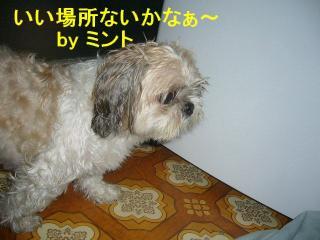 mint_20070924_16