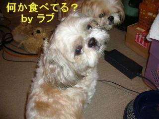 love_20070926_1