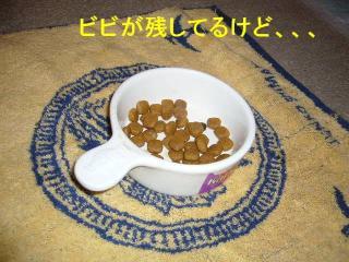 gohan_20071005_1