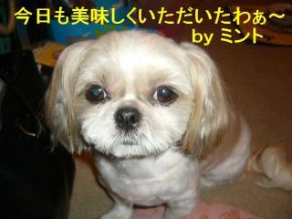 mint_20071005_6