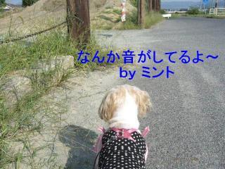 mint_20071007_2