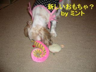mint_20071014_1