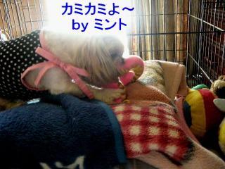 mint_20071014_12
