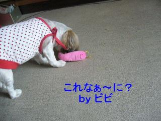 bibi_20071014_11
