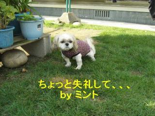 mint_20071008_3