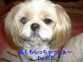 bibi_20071012_1