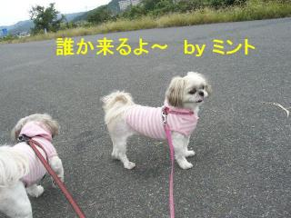 mint_20071013_1
