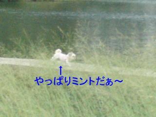 mint_20071016_3