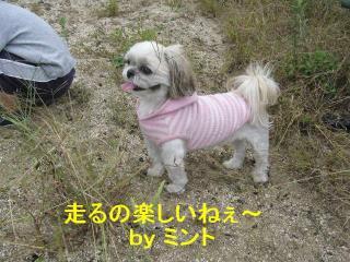 mint_20071015_2