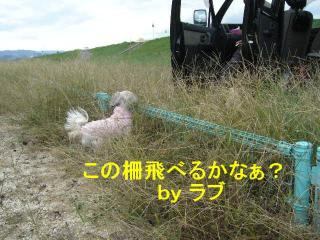 love_20071016_1