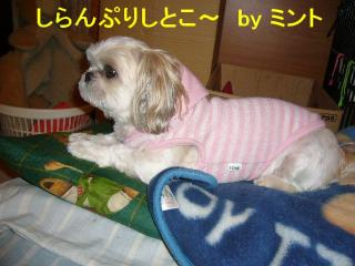mint_20071018_2