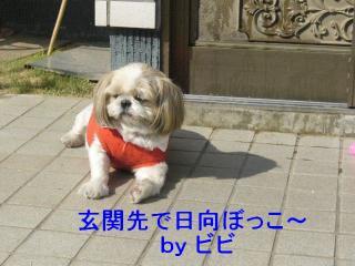 bibi_20071020_2