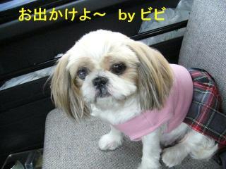 bibi_20071022_1