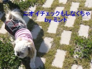 mint_20071022_1