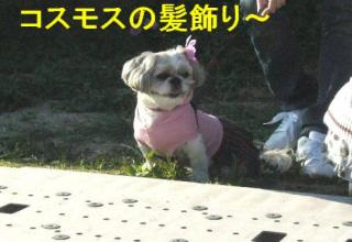 love_20071023_1