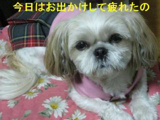 mint_20071021_1