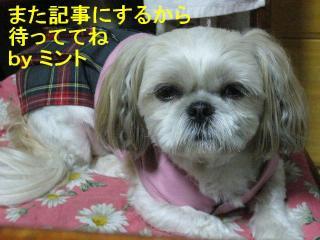mint_20071021_2