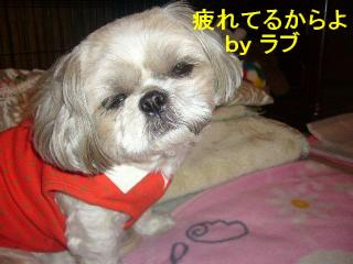love_20071024_2