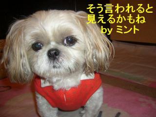 mint_20071024_1