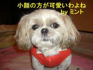 mint_20071024_2