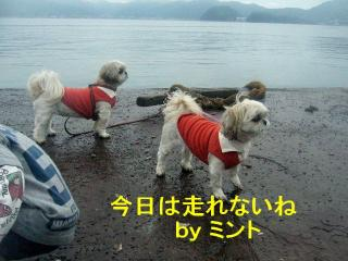 lovemint_20071026_3