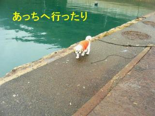 bibi_20071026_2
