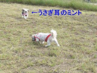 mint_20071030_1