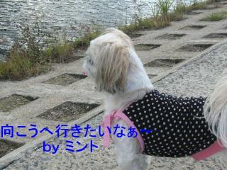 mint_20071031_11