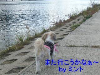 mint_20071031_12