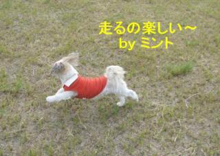 mint_20071108_1