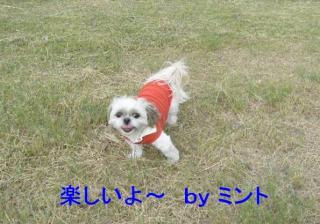 mint_20071108_2