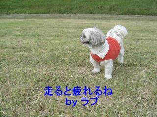 love_20071108_2