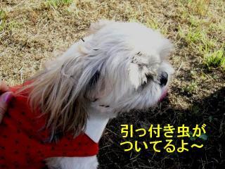 mint_20071108_3