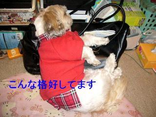 mint_20071106_2