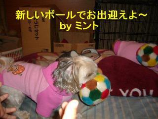 mint_20071107_1
