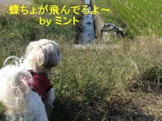 mint_20071110_1