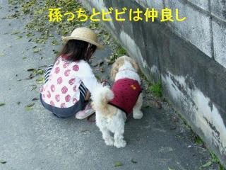 bibiaika_20071110_2