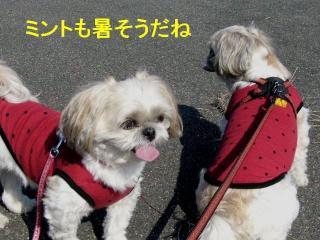 mint_20071110_2