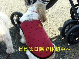 bibi_20071110_2