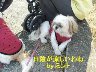 mint_20071110_3