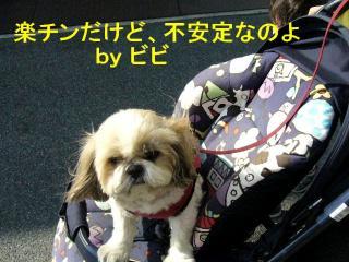 bibi_20071111_2
