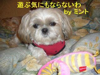 mint_20071115_2