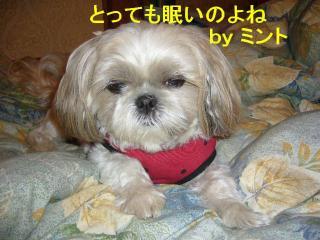 mint_20071115_1