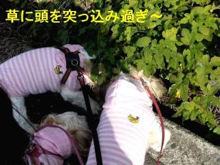 oyako_20071118_1