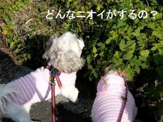 oyako_20071118_2