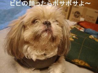 bibi_20061220_1